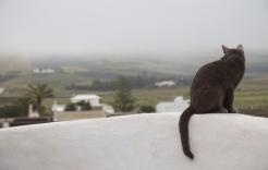 Huiskat in Lanzarote