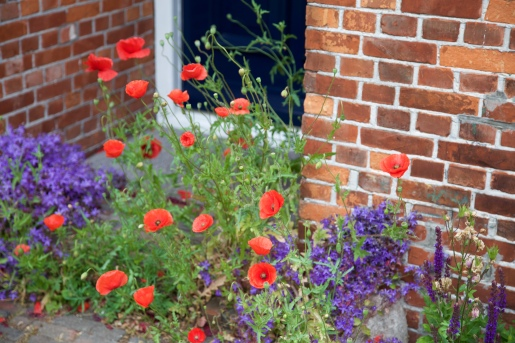 Ameland, bloemen