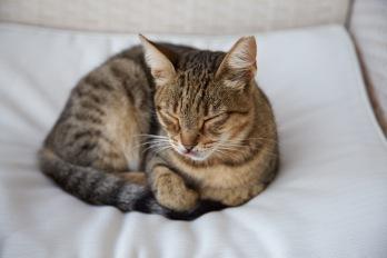 de huiskat