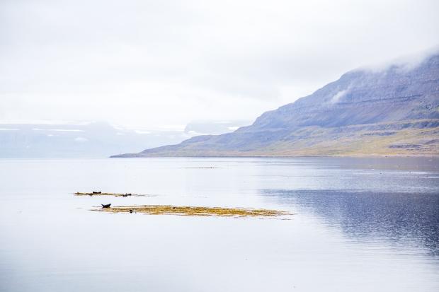 IJsland - de Westfjorden